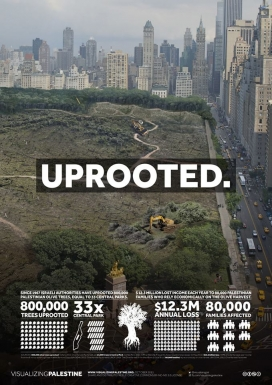 Uprooted olive trees areas in Palestine were as big as 33 Central Parks