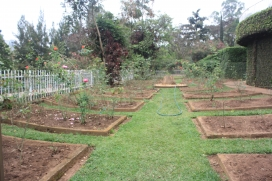 Graves in the Kigali Genocide Memorial