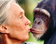 Jane Goodall is a teacher who inspires