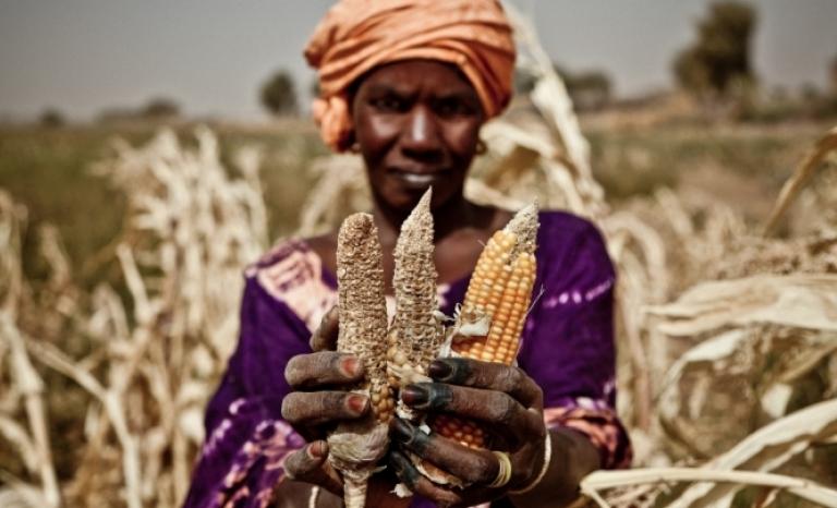 Food Emergency in Africa and Yemen.