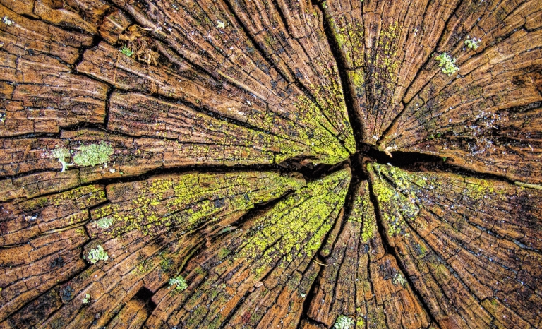 Stump Scars / Photograph: Wayne S. Grazio, Flickr