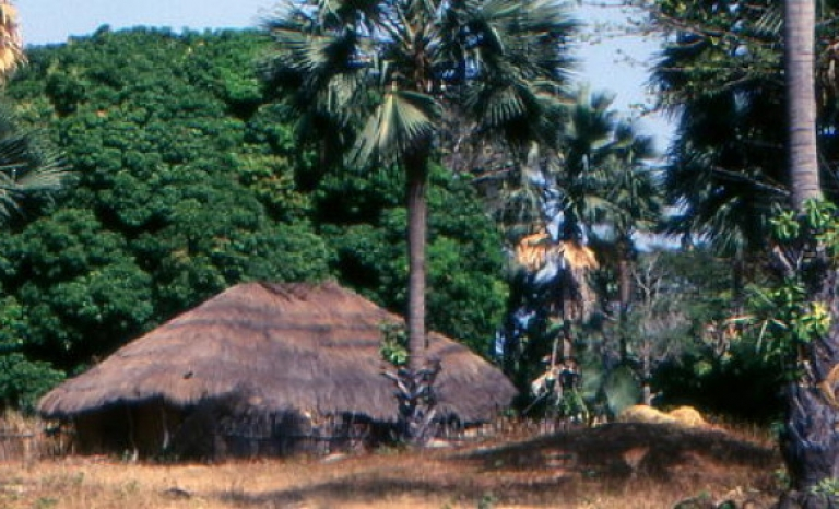 Casamance, the region that seeks peace and independence from Senegal
