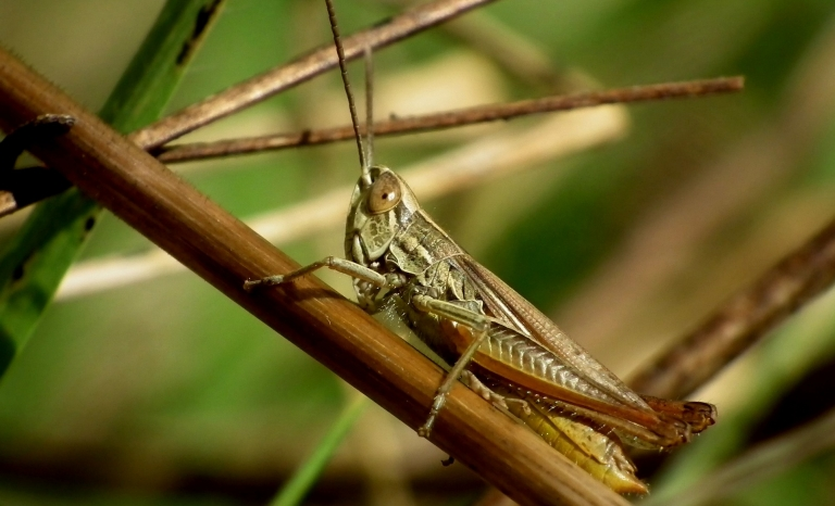 Is the worst plague of desert locust in Kenia in 70 years.