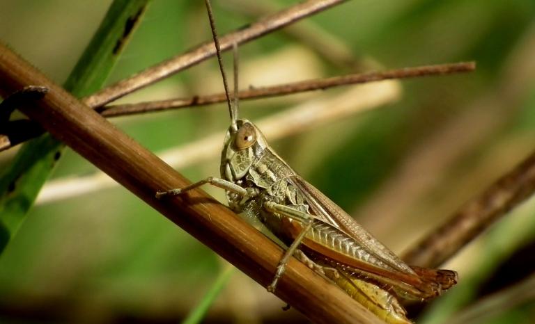 Is the worst plague of desert locust in Kenia in 70 years.