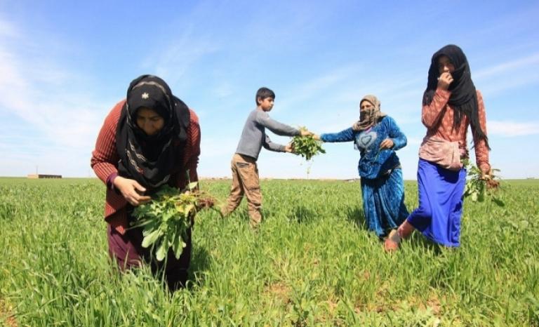 The Kurdish people are organized in democratic confederalism.