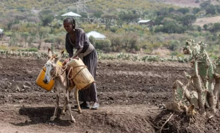 The Tigray conflict has left more than 350,000 in a state of extreme famine.