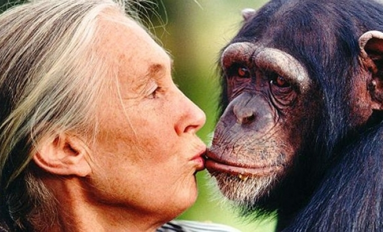 Jane Goodall denounces the million-dollar business of wildlife trafficking
