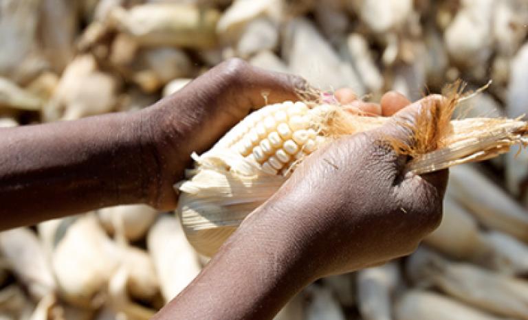The action targets five countries: Mauritania, Mali, Ethiopia, Djibouti and Yemen.