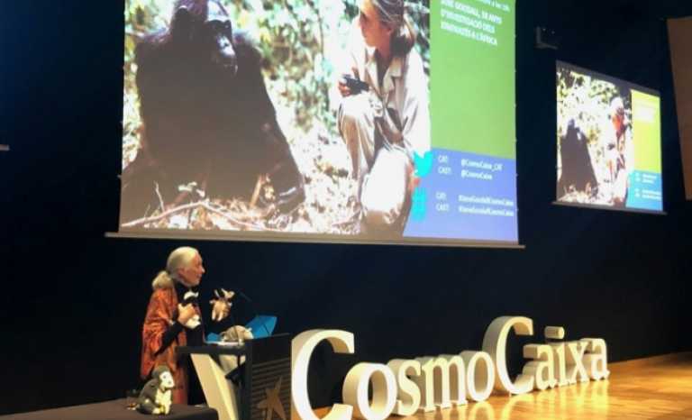 The renowned scientist and activist gave a conference in Barcelona titled 'Jane Goodall, 58 years of investigation and conservation of chimpanzees in Africa'.