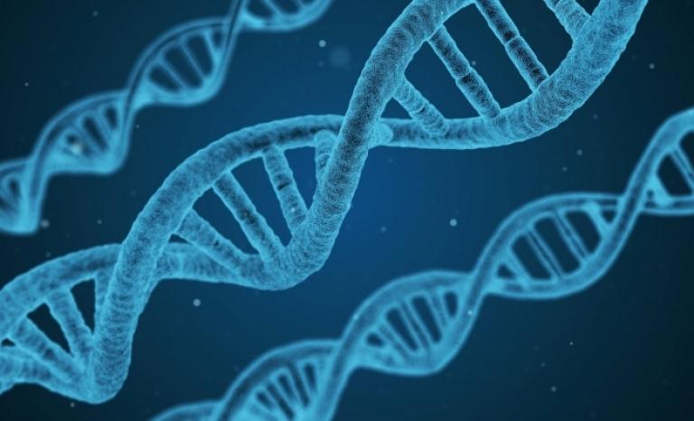 Gene therapy is one of the treatments under study to treat myotubular myopathy.
